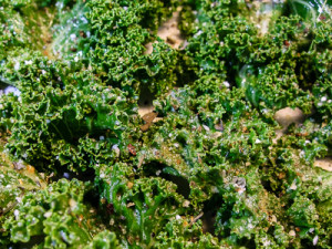 Spiced Kale Chips