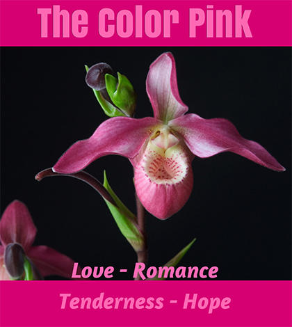 The Color Pink - color symbolism